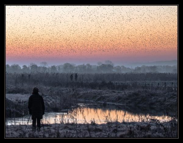 The Birdwatcher by mjparmy
