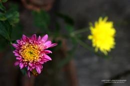 Twin Flowers !!