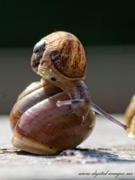 A Snail on a Shell
