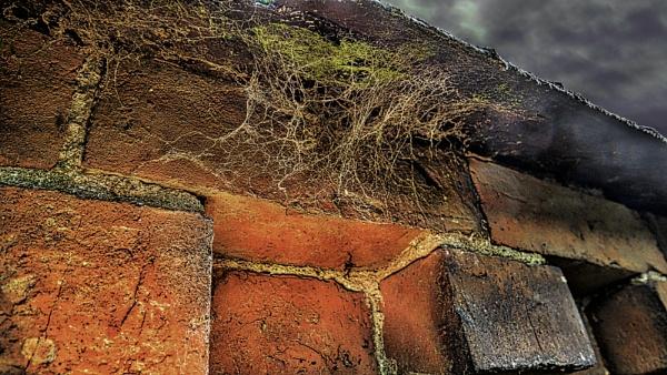 Cob Webs upon Older Cob Webs by RLF