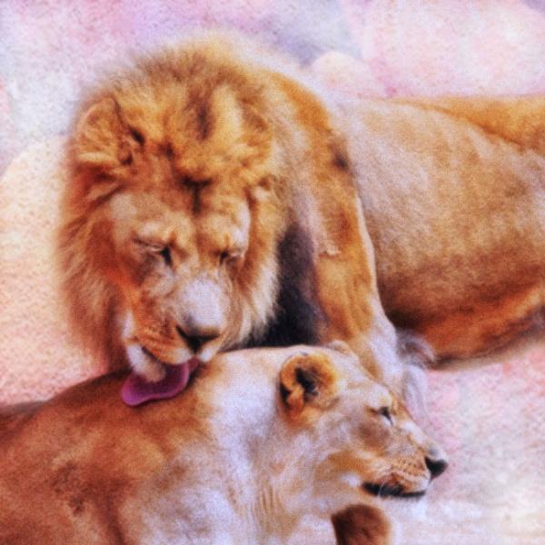 Romance in the Animal Kingdom by john_w168