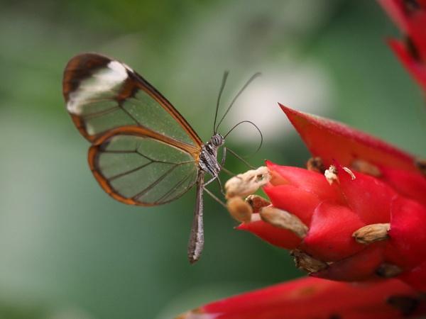 Butterfly macro by joshwa