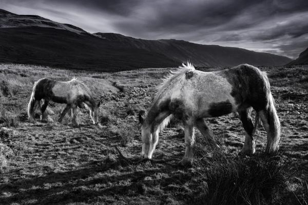2 Ponies by Mike43