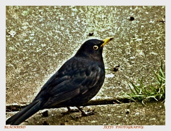 I\'ve got my eye on you. by kojack