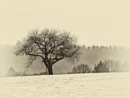 Winter Blanket XIV by hrsimages