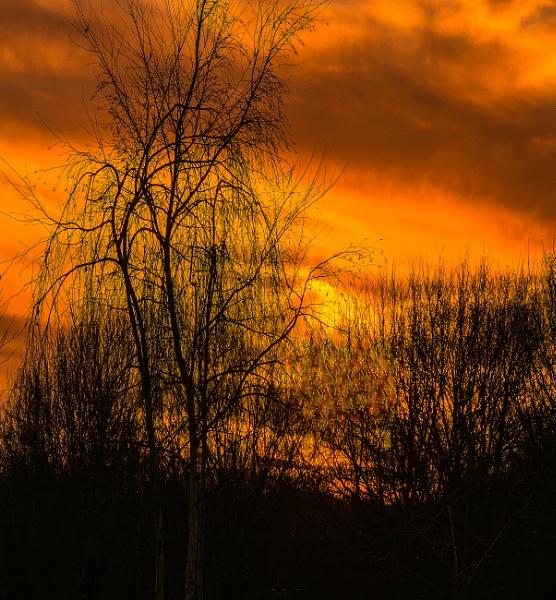 fading light by estonian