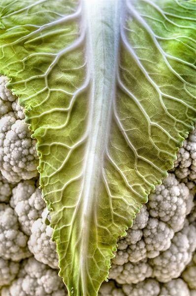Cauliflower by iangilmour