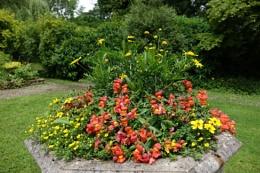 Dragaons and daisies