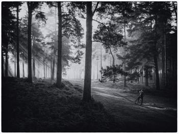 Mono forest