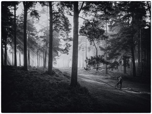 Mono forest by StuartAt
