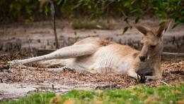 The Toorbul Kangaroos