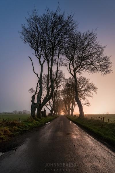 The Dark Hedges at Dark by Johnnybairdphotography