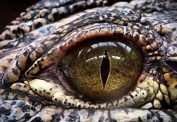 Eye see you by PJForrester