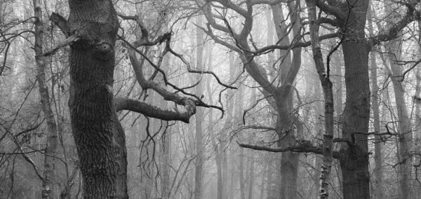 Mistree by tom_earwaker