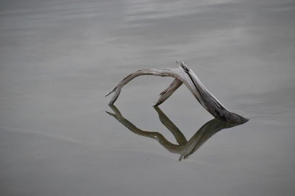 Reflection by SaadToma
