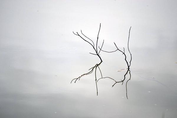 Dance on the Lake by SaadToma