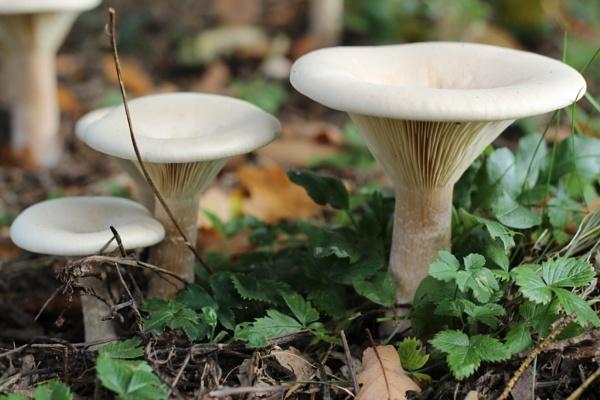 Mushrooms by Vferri4