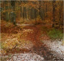 Autumn to Winter. by MalcolmM