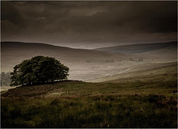 Dark Dales by KingBee