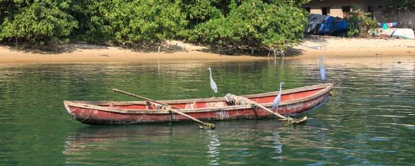 Herons watching for fish by brianwakeling