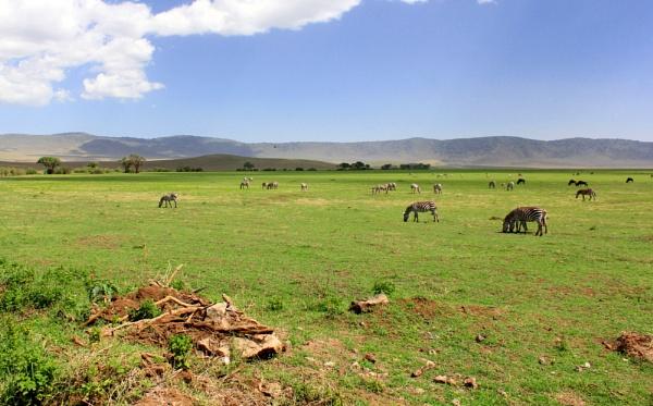 Grazing in Ngorogoro by babajoshua