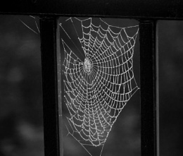Misty and cobwebs