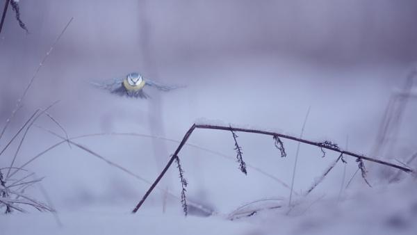 BLUES by maratsuikka