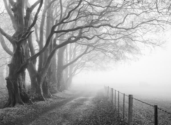 Foggy by dawnstorr