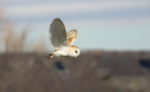 Owls by Len1950