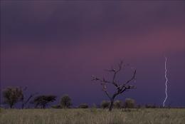 Dusky Storm in the Karoo