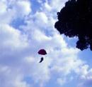 Is it a bird, is it a 'plane? by ddolfelin