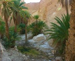 Landscape #8  Outside Tozeur, Tunisia