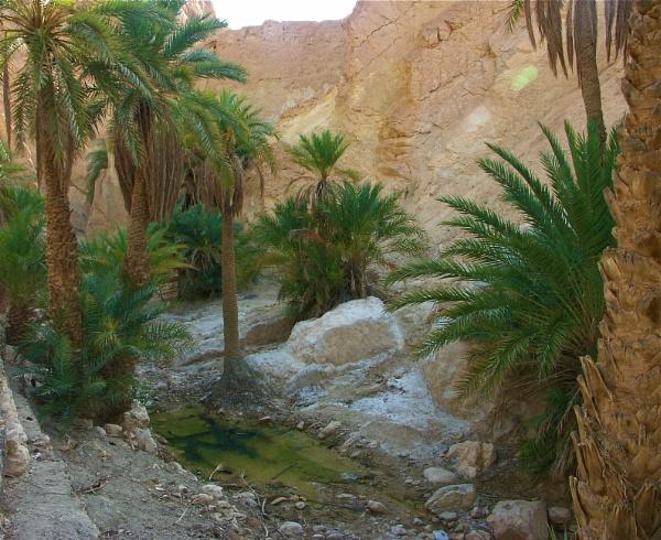 Landscape #8  Outside Tozeur, Tunisia by handlerstudio