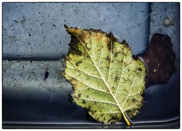 Leaf in Ice by Nikonuser1
