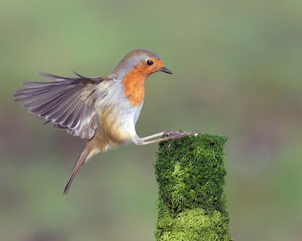 Spot on landing! by Holmewood