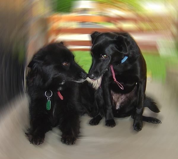 Puppy Love by jrholdsworth42