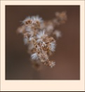 Seed Head 2a by taggart