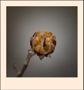 Seed Head 4 by taggart
