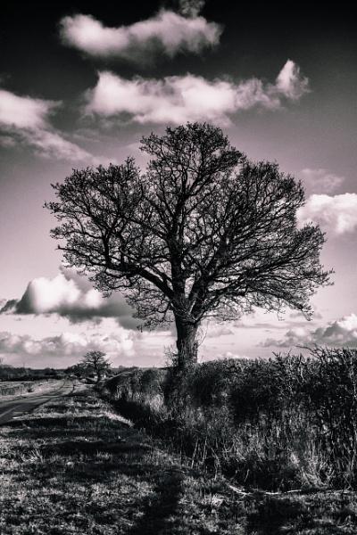 The tree by chrisbryan