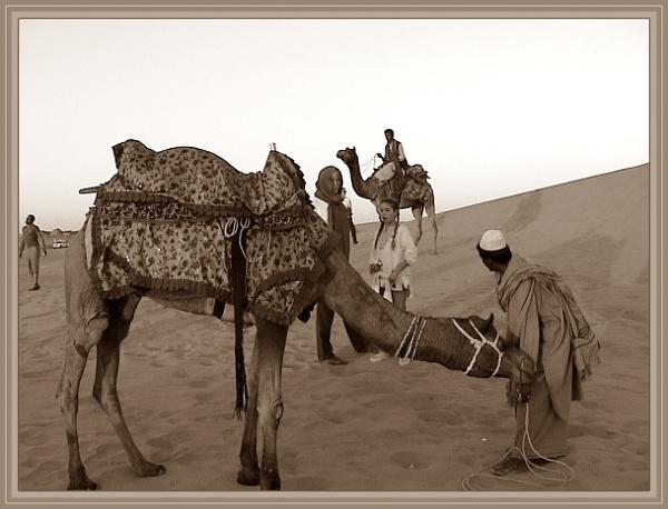 *** Camel Safari *** by Spkr51
