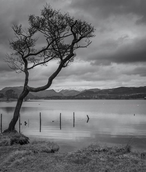 Lone Tree Ullswater by Leedslass1
