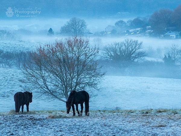 Twilight Mist by SamP