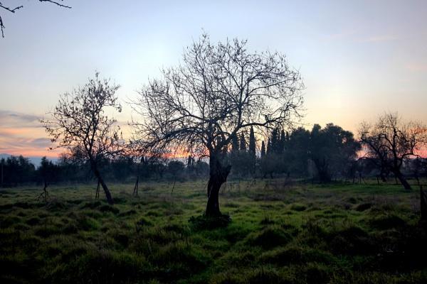 WINTER LANDSCAPE by dimalexa