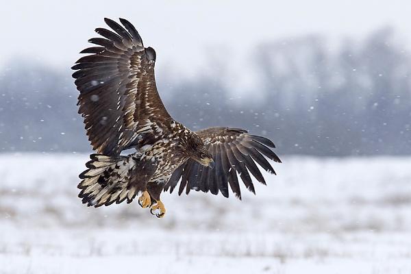 Landing by gergosz