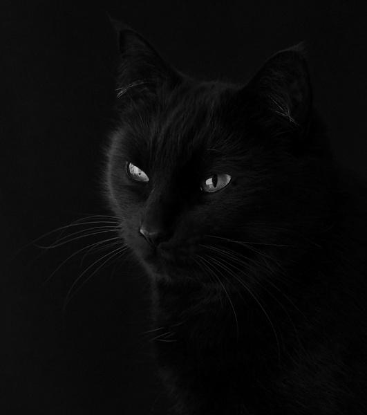 Ledley by cattyal