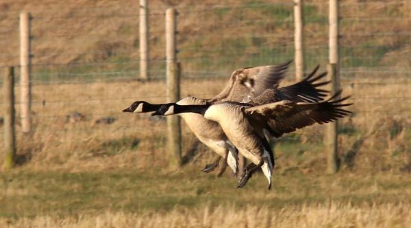 Formation landing by oldgreyheron
