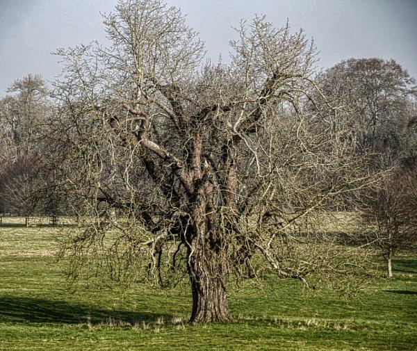 Gnarley old tree by Kurt42