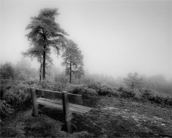 Hoar Frost by Techno