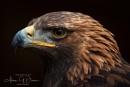 Lord of the Wings by Tynnwrlluniau