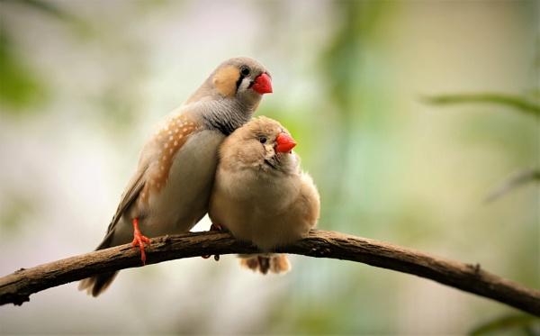 Love Birds by Len1950